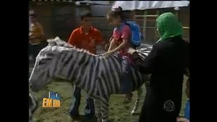 Burro vira zebra em Gaza - Entretenimento - R7 Hoje em Dia