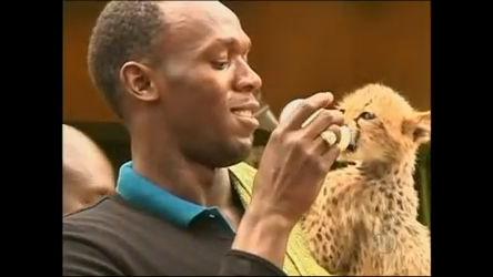 Velocista jamaicano adota filhote de guepardo no Quênia - Rede ...