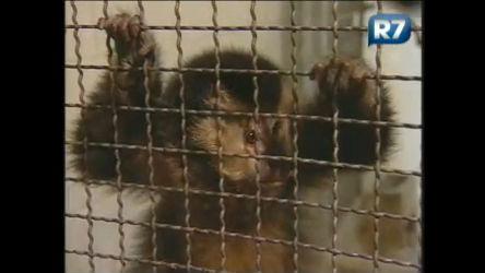 Bichos que sofreram maus tratos são tratados em São Vicente ( SP ...