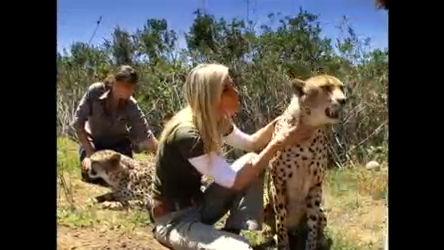 Manú passeia com leopardo como se fosse bicho de estimação ...