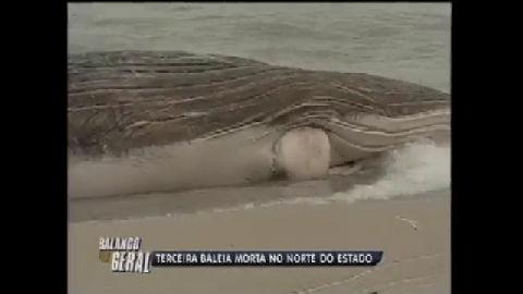 Filhote de baleia jubarte é encontrada no norte do Rio - Rio de ...