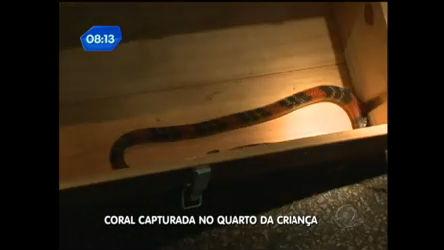 Família encontra cobra coral no quarto de criança em SP - Notícias ...