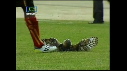 532626759fd8e Jogador de futebol que provocou a morte de coruja recebe ameaças na  Colômbia - RecordTV - R7 Fala Brasil
