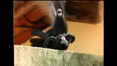Pragas Urbanas: Revoadas de pássaros trazem sujeira e doenças ...