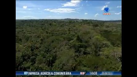 NBlogs discute alternativas sustentáveis para a Amazônia - Record ...