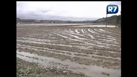 Produtores rurais do Itajaí ( SC) calculam prejuízos com chuvas ...