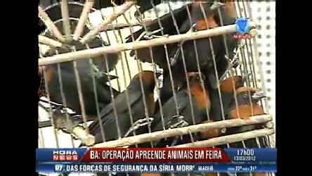 Policiais apreendem mais de 120 animais em Feira de Santana ( BA ...