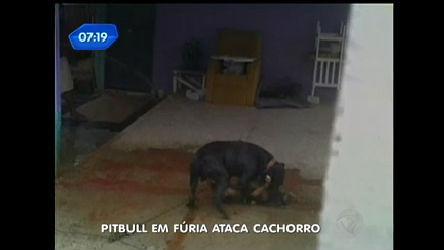Pit bull em fúria ataca cachorro no RS - Record Play - R7 Balanço ...