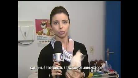 Gatinha é torturada e tem olhos arrancados - Distrito Federal - R7 ...