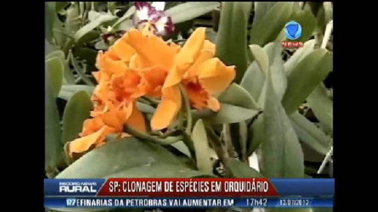 Orquidário no interior de São Paulo faz clonagem de espécies ...