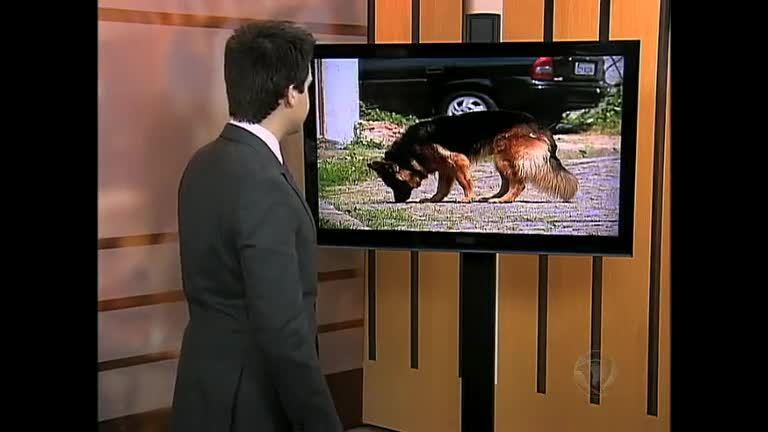 Cadela salva dono após assalto em Santa Teresa ( RJ) - Rio de ...