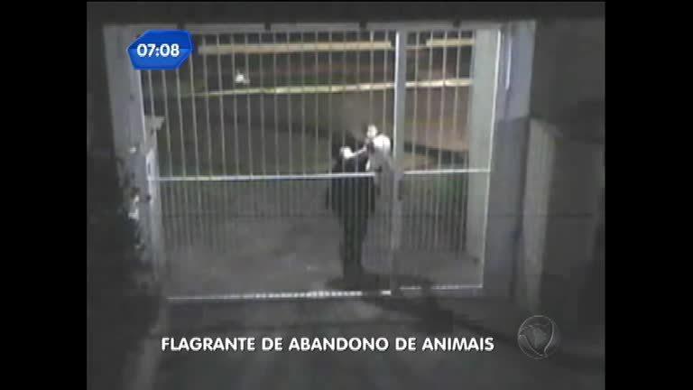 Câmeras de segurança registram abandono de animais em Novo ...