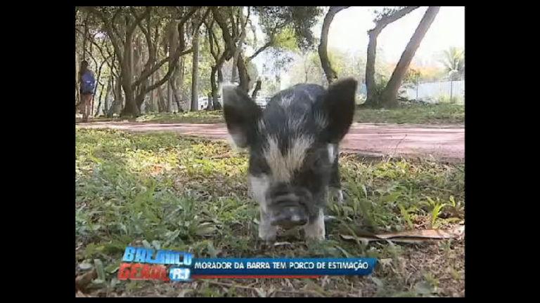 Jovem cria pequeno porco como bicho de estimação no Rio - Rio ...