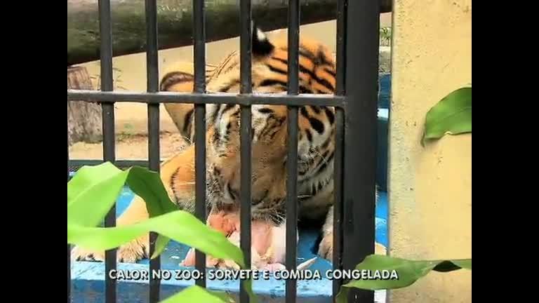 Mimo: com calor, animais do zoo do Rio ganham sorvete - Rio de ...