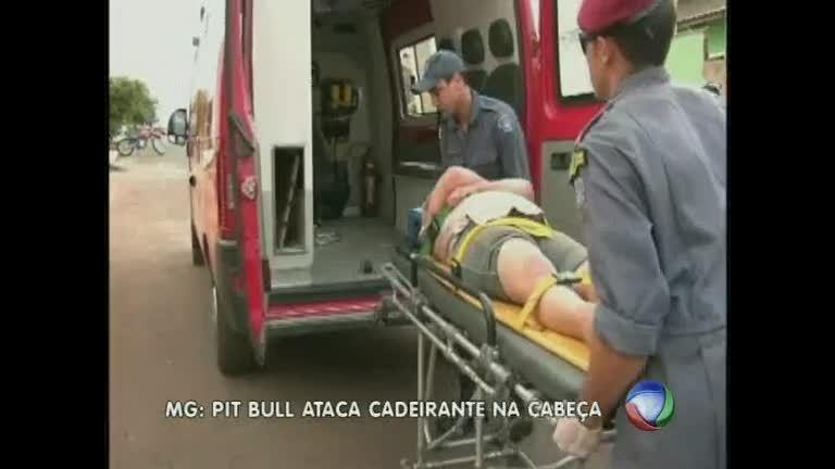 Pitbull ataca cabeça de deficiente física, no Alto Paranaíba - Minas ...