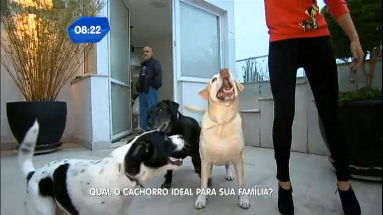 Descubra qual é o cão ideal para sua família - Notícias - R7 SP no Ar