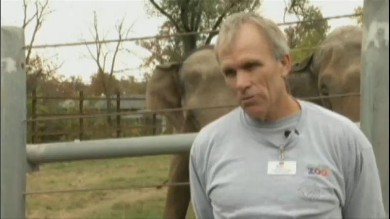 """Sem """" paciência"""": elefanta contraria nome e mata tratador de ..."""