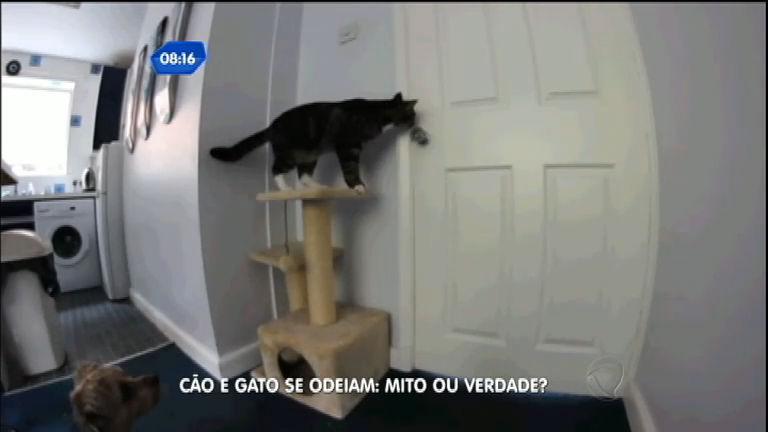 Mito ou verdade? Cães odeiam os gatos? - Notícias - R7 SP no Ar