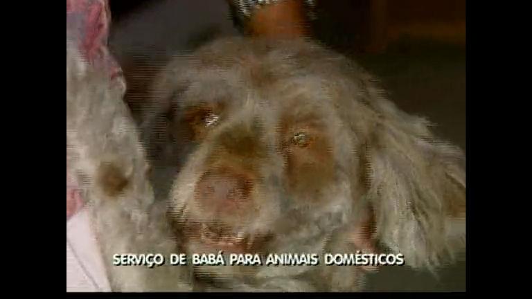 Salvador já tem serviço de babá para animais domésticos - Bahia ...