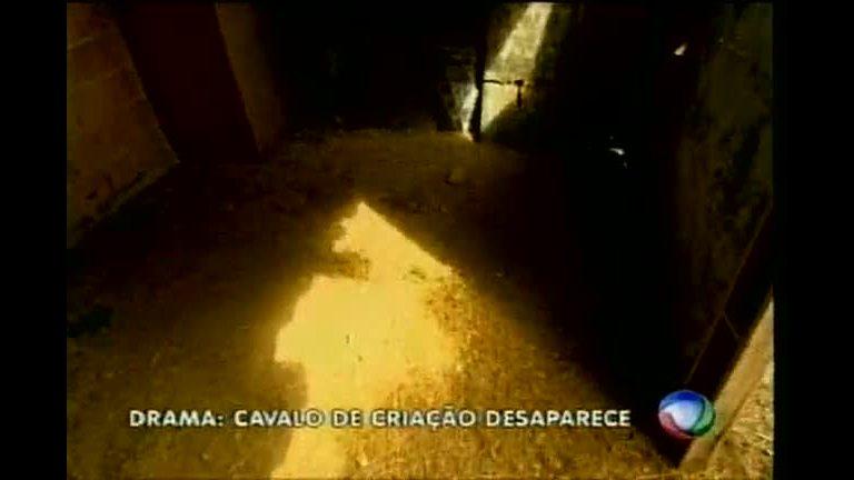 Cavalo de estimação desaparece e deixa dono desesperado ...