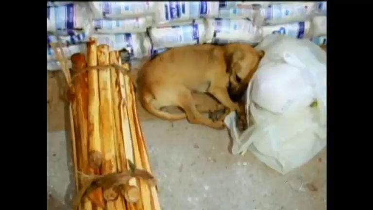 Fábrica clandestina de palmito é descoberta em Osório (RS ...