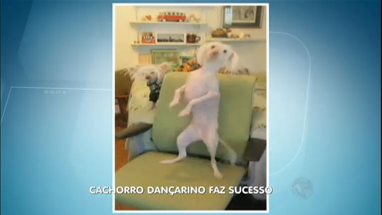 Pancadão? Cachorro dançarino requebra e vira sucesso na internet ...