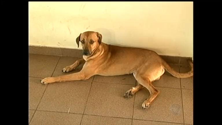 Vira-lata evita assalto à residência e vira herói em Ribeirão Preto (SP)