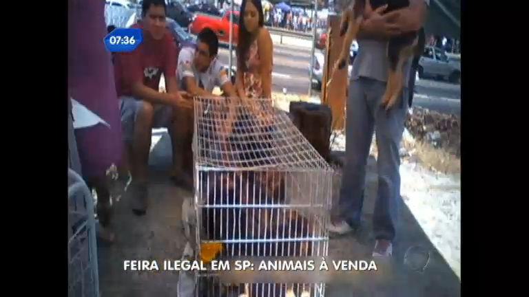 Feira ilegal vende animais livremente em SP - Notícias - R7 SP no Ar