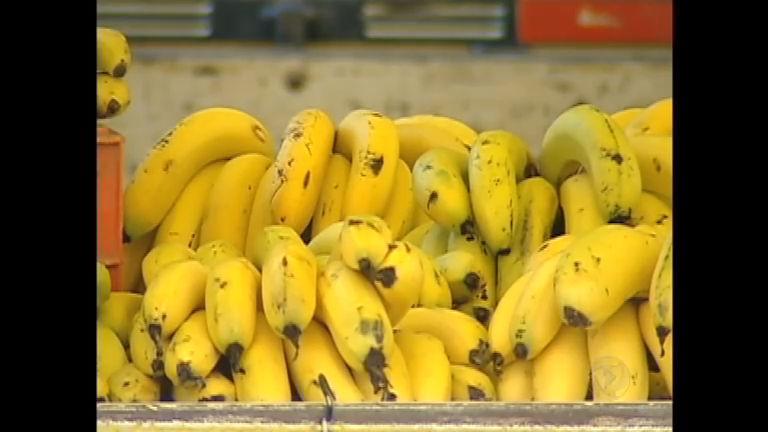 Preço da banana sobe cinco vezes mais do que inflação nos ...