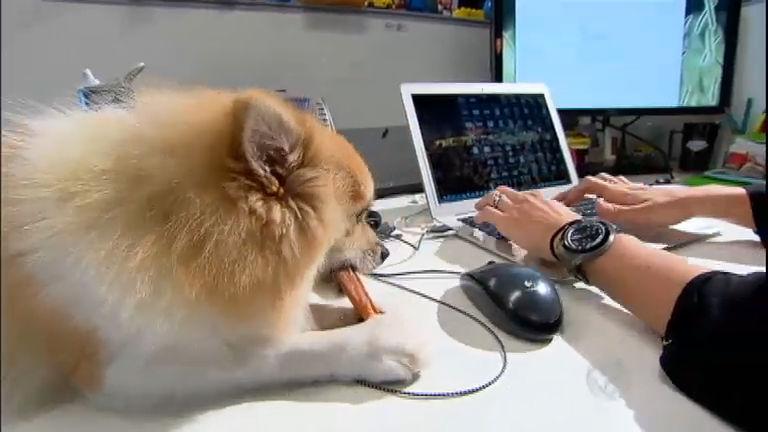 Bichos Curiosos: cachorros passam dia no trabalho das donas ...