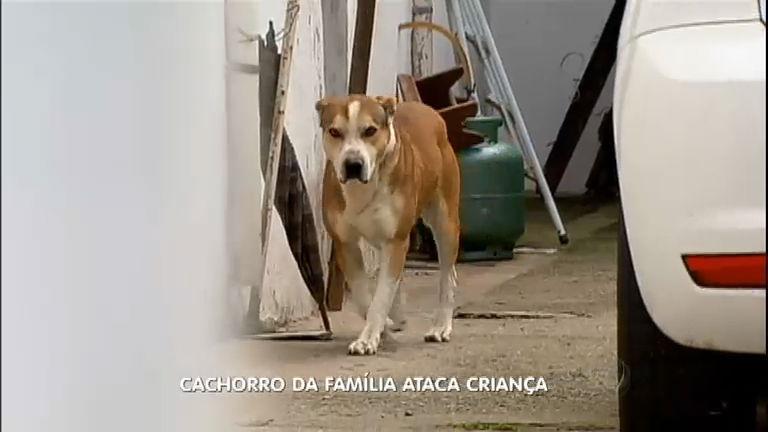 Pitbull ataca criança de dois anos dentro de casa em São Paulo ...