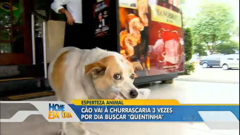 Cachorro esperto vai à churrascaria três vezes por dia buscar marmita