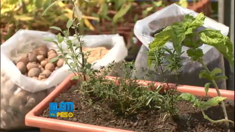 Aprenda a fazer uma horta na sua casa e tenha vegetais ...