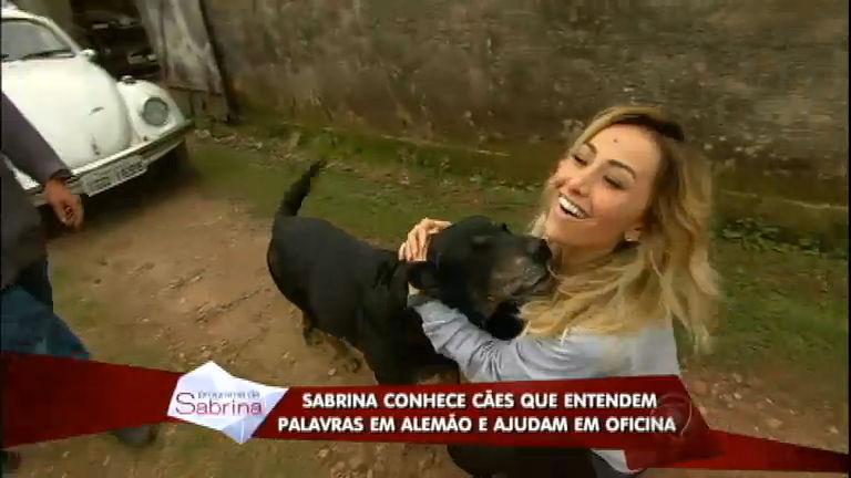Figurinhas do Brasil: Sabrina conhece cão inteligente que entende ...