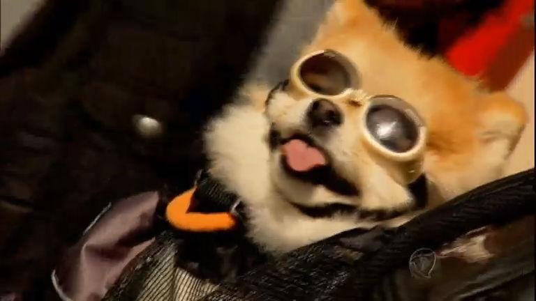 Óculos para cachorro é a nova moda entre os pets - RecordTV - R7 Domingo  Espetacular b69c66bbb6