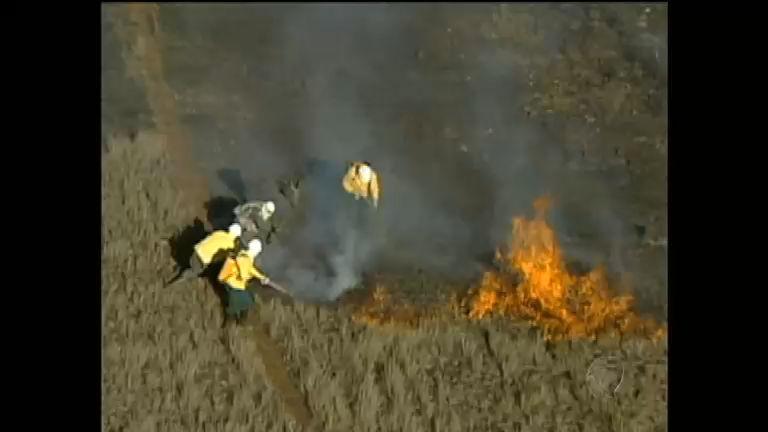 Região Sudeste sofre com queimadas provocadas pelo tempo seco ...