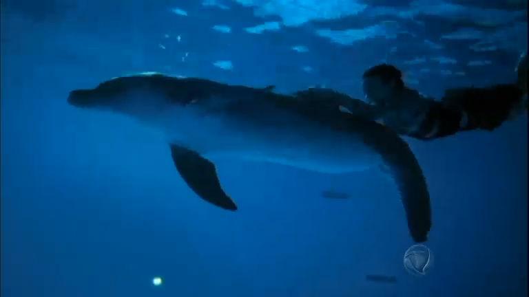 Winter, golfinho que perdeu cauda em armadilha, faz sucesso na ...