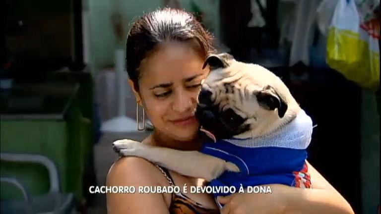 Emocionante: cachorro roubado é devolvido à dona na zona leste ...