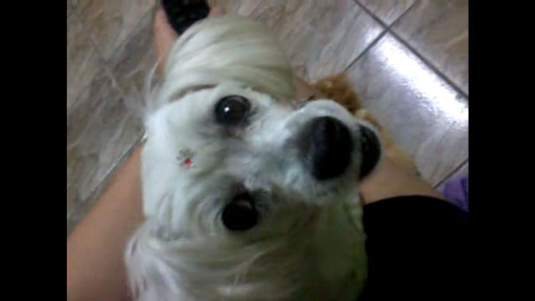 Quanto amor! Cachorrinha demonstra carinho pela sua dona - R7 ...