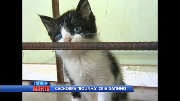 Pulou a cerca: cachorra dá à luz gatinho no interior do Paraná ...