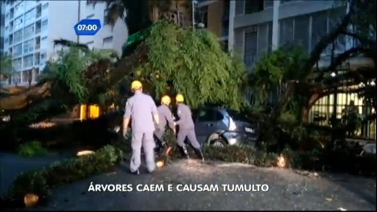 Chuva: árvore cai e danifica carro em bairro nobre de São Paulo ...