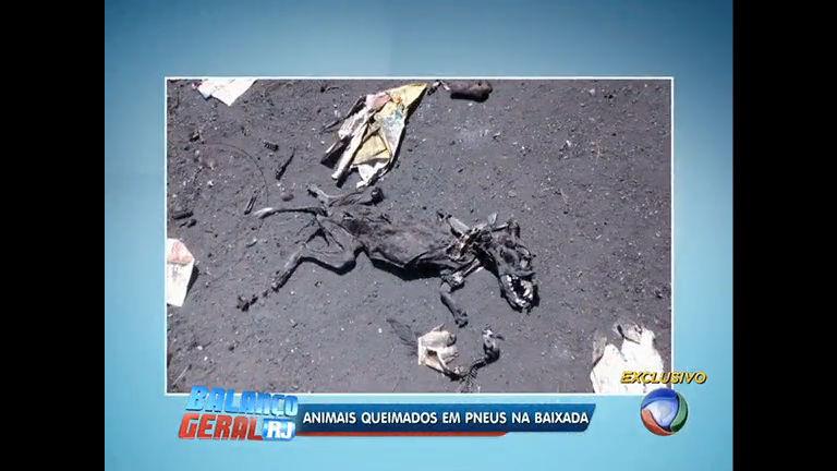 Polícia resgata animais que seriam queimados até a morte em sítio ...