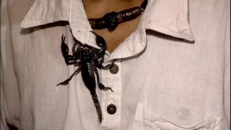 """Tailandês desafia o perigo e constrói """"amizade"""" com escorpiões ..."""