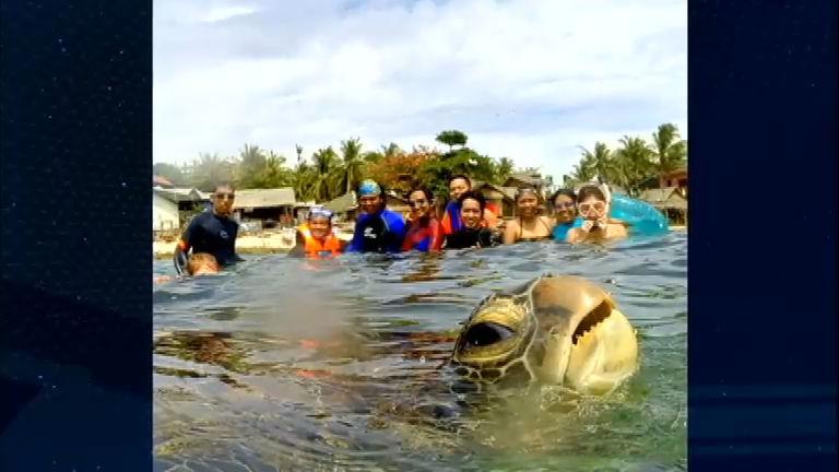 Bichos Curiosos: tartaruga aparece de surpresa em foto - Notícias ...