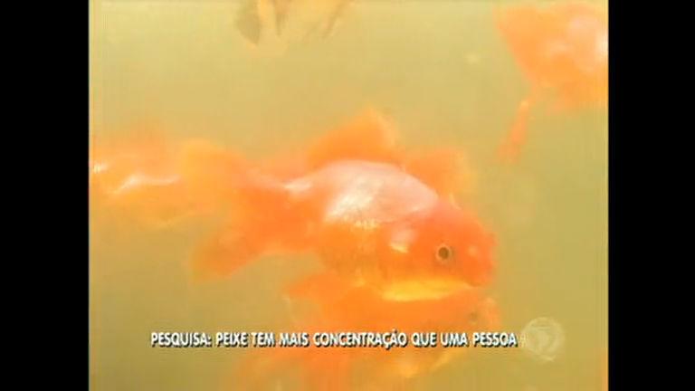 Pesquisa diz que concentração das pessoas é menor que de um peixinho dourado