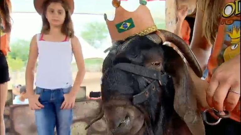 """Renata Alves visita a """"Roliúde Nordestina"""", cidade onde o bode é rei"""