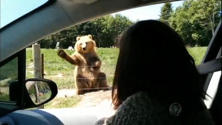 """Urso """"goleiro"""" de parque americano faz sucesso na internet"""