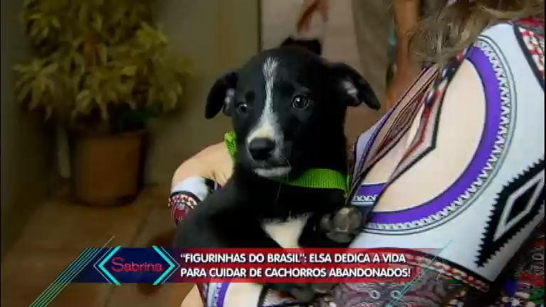 Exemplo de cidadania: mulher de 70 anos dá abrigo a 46 cachorros no interior de SP