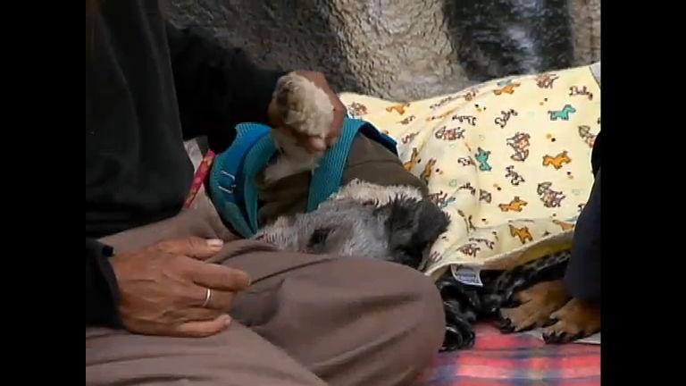 Gugu conta história de catadora de lixo que se dedica a salvar uma cachorra