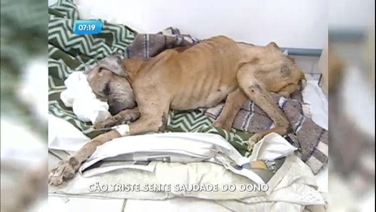 Cachorro fica 15 dias sem comer e emagrece muito com saudade ...